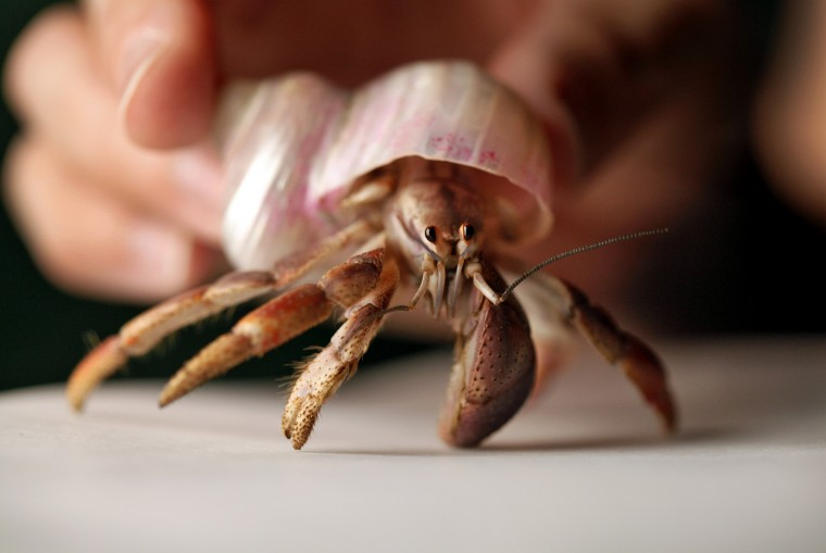 Hermit Crab Care Do's and Don'ts