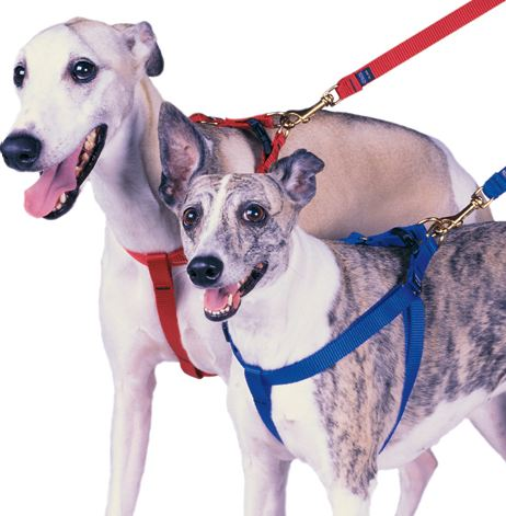 Dogs with Harnesses