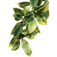 Exo Terra Hanging Rainforest Plant - Mandarin - Large