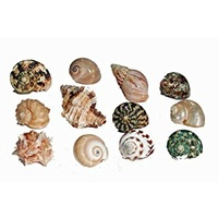 Hermit Crab Spare Shell - Regular - Medium